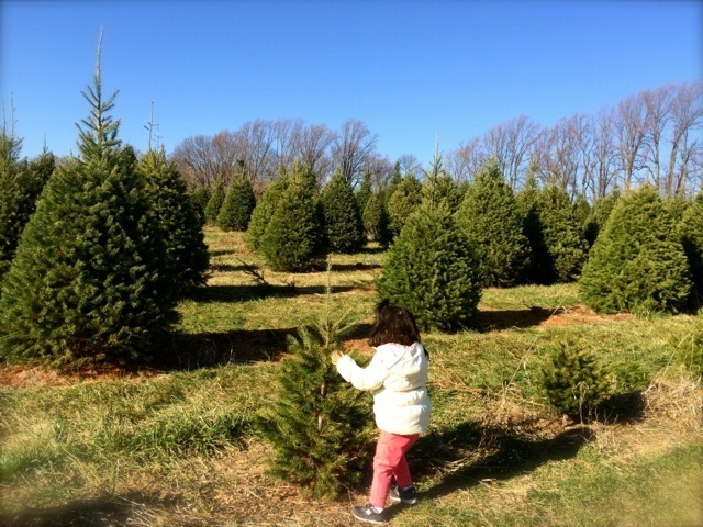 自分でクリスマスツリーを伐採,アメリカ,子育て ,イベント