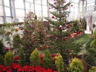 新潟県立植物園,新潟,イルミネーション,雪