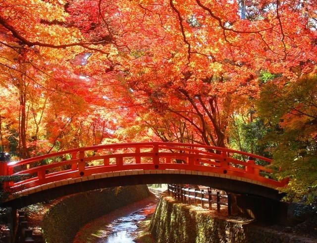 北野天満宮 紅葉,京都,紅葉,子ども