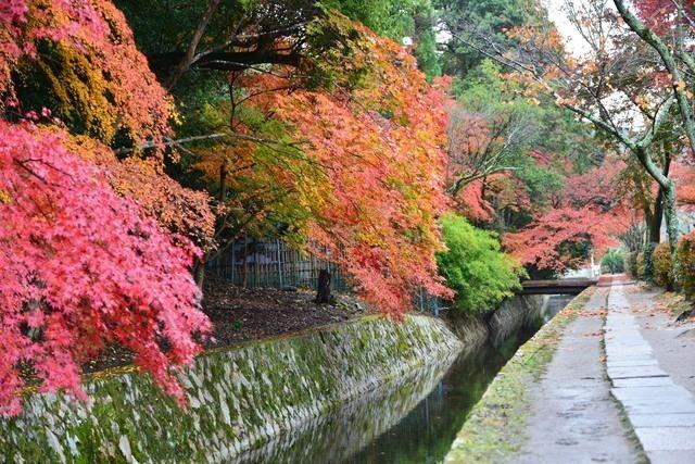 哲学の道,京都,紅葉,子ども