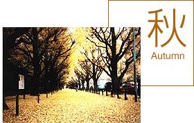 明治神宮外苑,東京,紅葉,名所