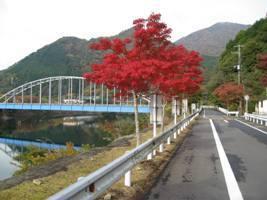 丹沢湖,神奈川,紅葉,スポット