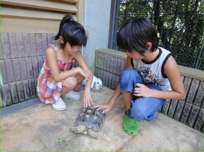 五月山動物園 ふれあい動物園,大阪,無料,子ども