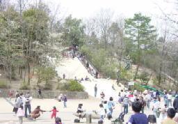 錦織公園,公園,アスレチック,大阪