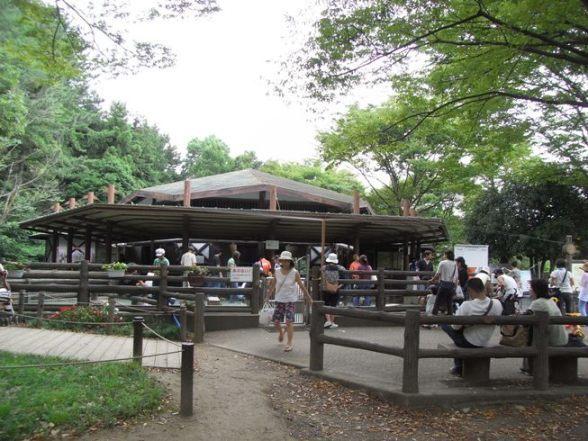 こども自然公園 コンタクト(ふれあい)コーナー 万騎が原ちびっこ動物園,横浜,公園,動物