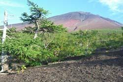 御庭から見る富士山山頂,山梨,ハイキング,山