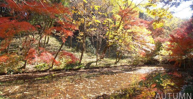 四季の森公園 秋,神奈川,四季の森公園,遊ぼう