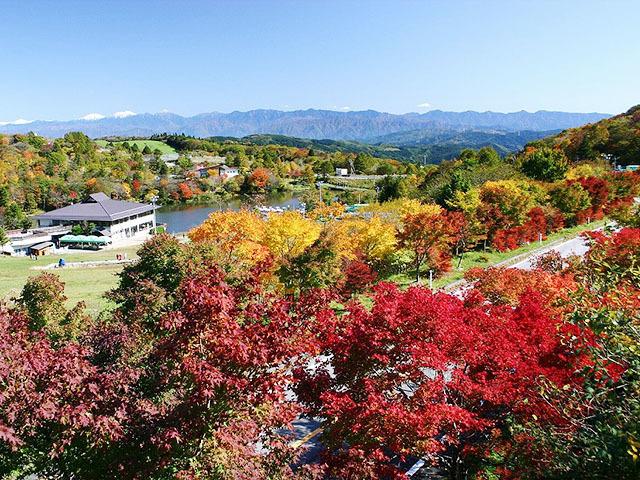 茶臼山の紅葉,愛知,ハイキング,山