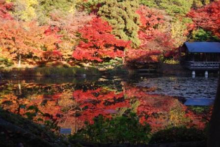 東山動植物園,紅葉 ,ライトアップ,愛知県