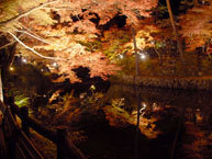 岩屋堂公園,紅葉 ,ライトアップ,愛知県
