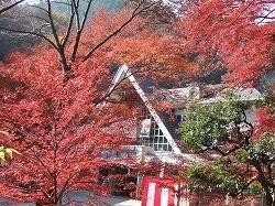 高尾山もみじまつり,東京,紅葉,イベント