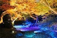 六義園夜のライトアップ,東京,紅葉,イベント