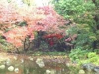 小石川後楽園,東京,紅葉,イベント