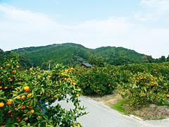 太陽園について,福岡,みかん狩り,おすすめ