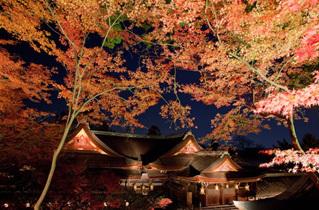 北野天満宮もみじ苑,京都,紅葉,おすすめ