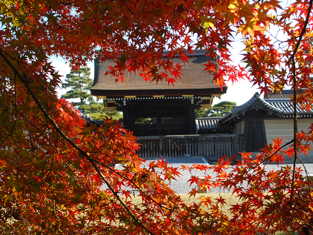 京都御苑,京都,紅葉,おすすめ