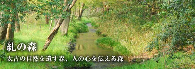 糺の森,京都,紅葉,おすすめ