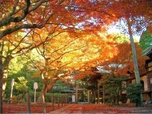 鎌倉宮,鎌倉,紅葉,子連れ