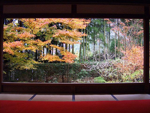 宝泉院,京都,紅葉,時期