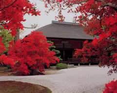 曼殊院門跡,京都,紅葉,時期