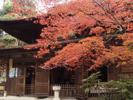 定光寺公園,愛知,子連れ,紅葉狩り