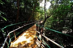 やんばる学びの森,沖縄,ハイキング,おすすめ