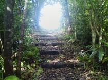 沖縄県立名護青少年の家,沖縄,ハイキング,おすすめ