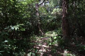 腰岳遊歩道,沖縄,ハイキング,おすすめ