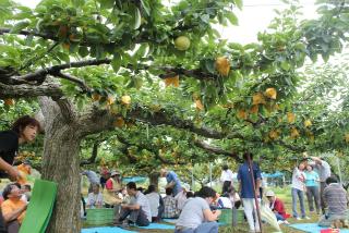 久美浜町果樹観光協会梨狩り,秋の行楽,梨狩り,京都