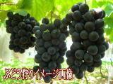マルタケたかしな果樹園,北海道,ぶどう狩り,子連れ