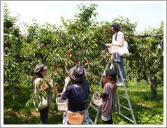 山本観光果樹園,北海道,ぶどう狩り,子連れ