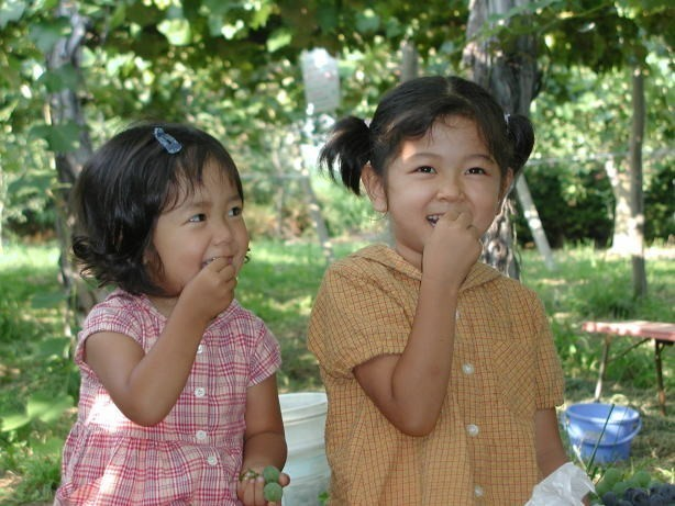 原遊覧園 梨狩り,長野県,梨狩り,子ども