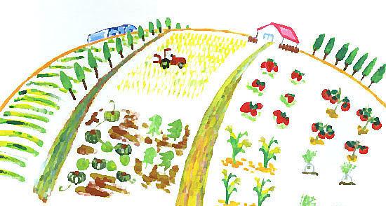 松村農場,北海道,じゃがいも,収穫
