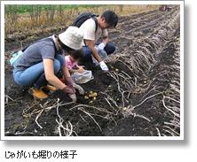 谷観光農場,北海道,じゃがいも,収穫