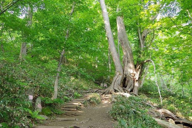 円山自然歩道,北海道,子連れ,旅行