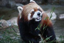 自然動物園行船公園レッサーパンダ,江戸川区,公園,遊具
