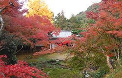 清水寺本坊庭園 紅葉,福岡,紅葉,スポット