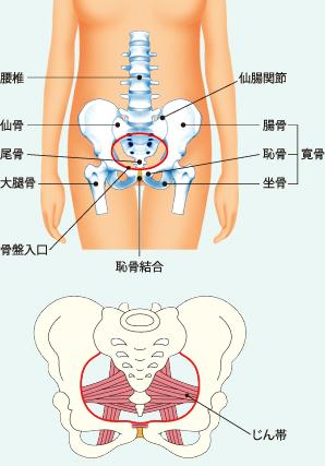 骨盤の仕組み,産後,骨盤矯正,方法