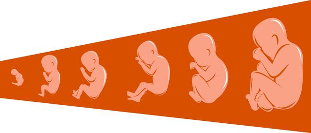 胎児成長,妊娠9ヶ月,