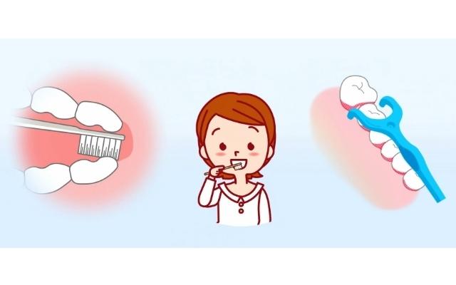 歯と歯茎のイラスト図,
