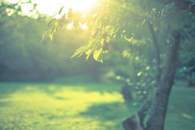 木々の写真,妊娠後期,吐き気,