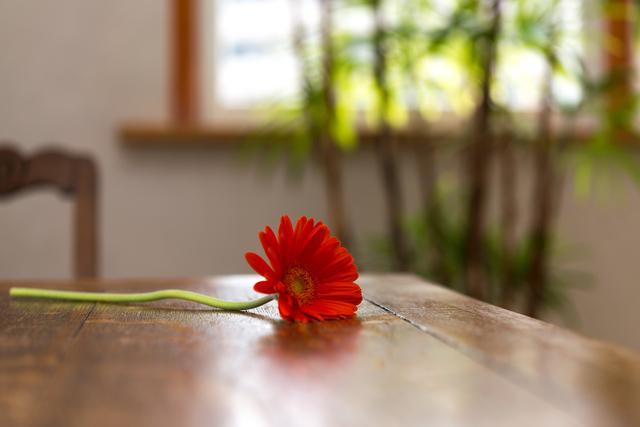 ガーベラ部屋花,妊娠初期,中絶,痛み