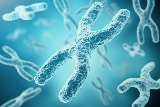 染色体,妊娠,流産,原因