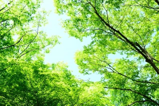 木の写真,産後,4ヶ月,