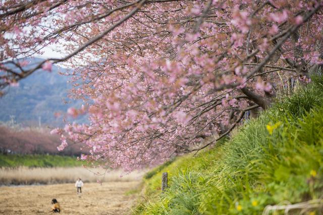 桜の花,名付け女の子,