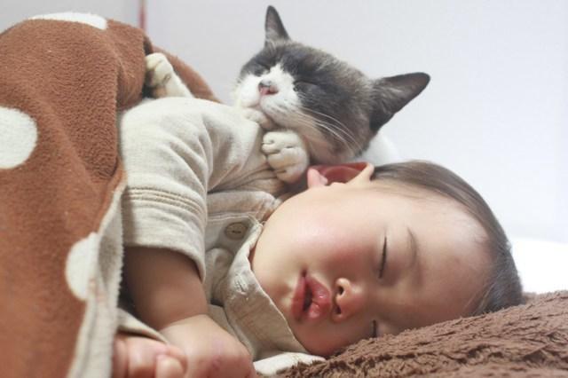 猫と寝る子ども,可愛いベッド,子ども,キャラクターベッド