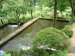 増渕魚園,釣り堀,茨城,おすすめ