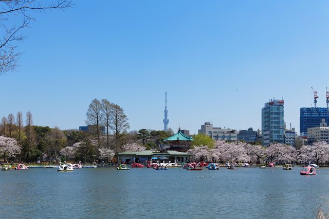 上野公園不忍池,上野公園,ランチ,