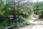 世田山 遊歩道,愛媛,子ども,登山