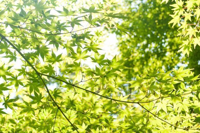 森の木,ベビー,リュック,